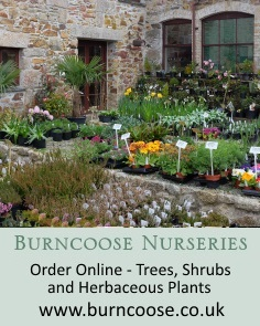 Burncoose Nurseries