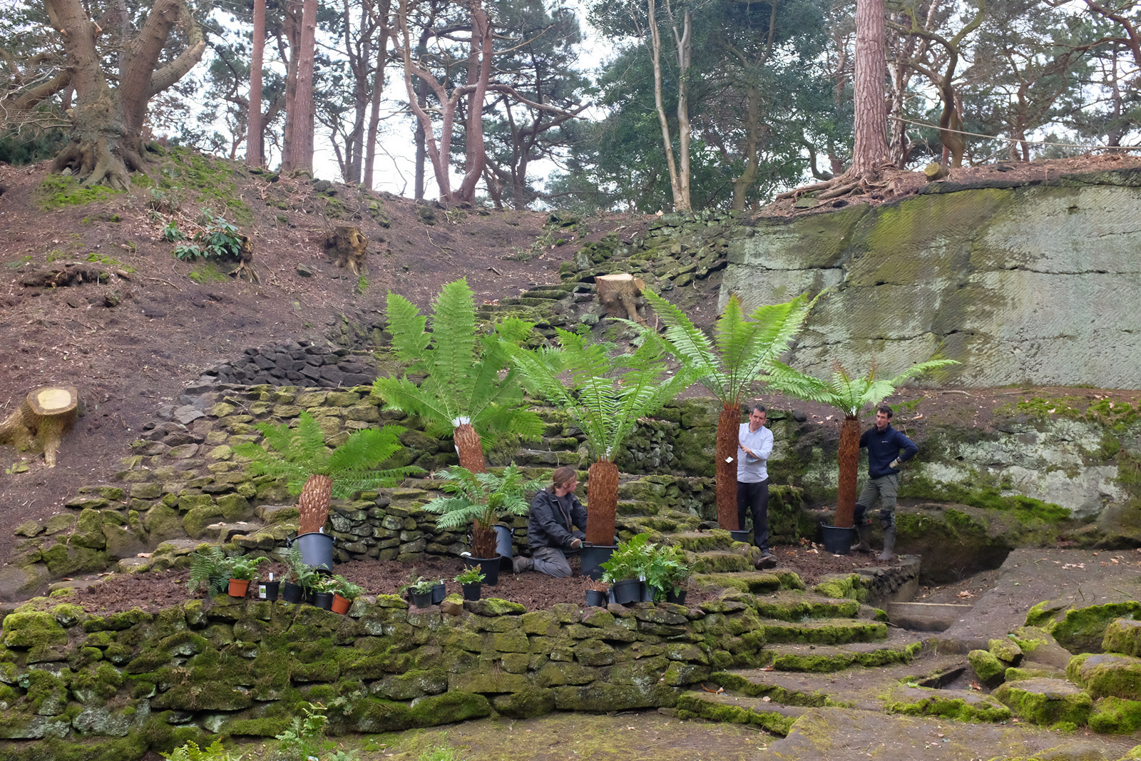 1st april the garden diary for Specimen trees