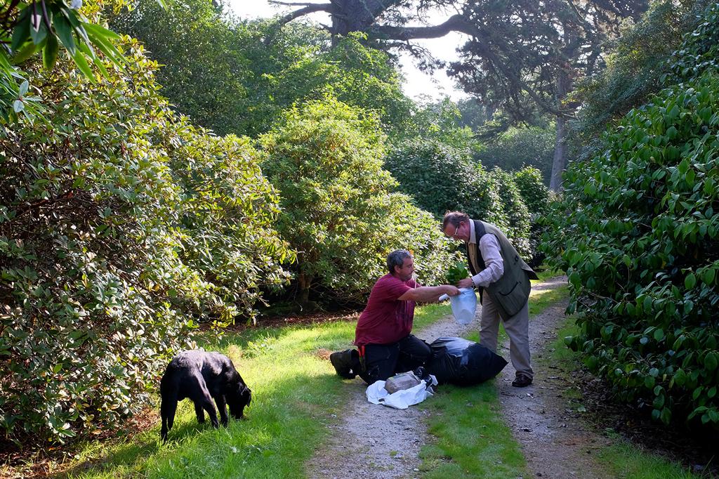 how to take camellia cuttings uk