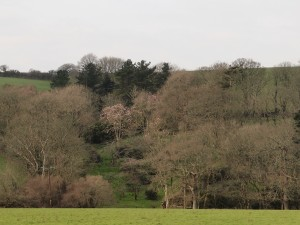 Looking across from the drive to Giddle Orchard