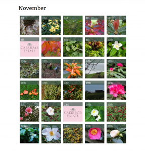November Entries