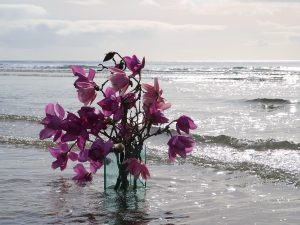 magnolias in the sea