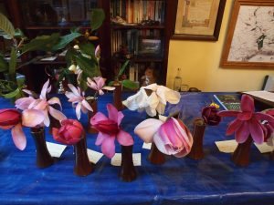 Magnolia breeding at Caerhays lecture