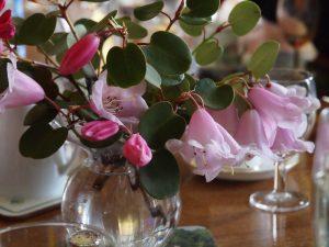 Rhododendron williamsianum hybrids