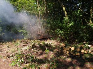 laurel clearing