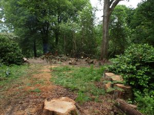 new laurel clearing area