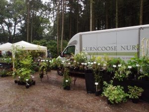 rare plant sale at Tregrehan