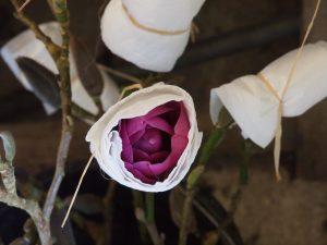 magnolias in the game larder