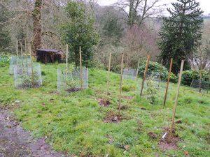 yesterday's planting