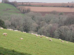 Views across Lawn Field