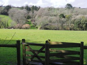 view from the drive over Lower Hellens field to Giddle Orchard