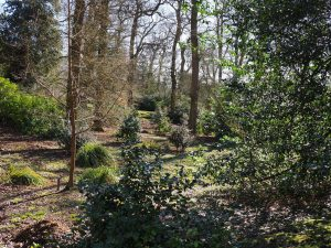 Views across the 'Japanese' garden with the first camellias