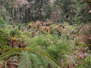 tree fern grove