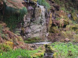 rocky waterfall and skunk cabbage