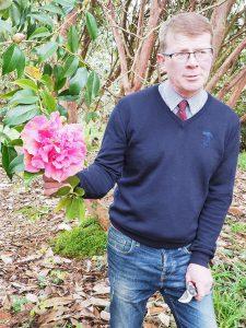 Camellia reticulata 'John Hunt'