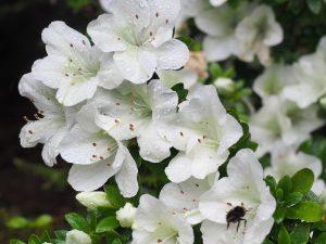 white flowered