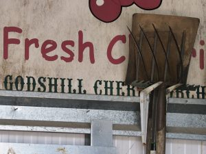 Godshill cherry farm