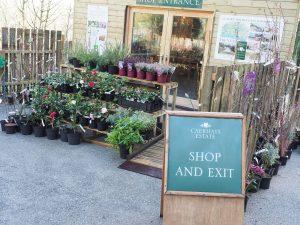 plant sales area