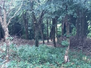 Brownberry Wood