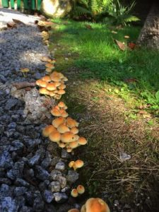 ominous looking mushrooms