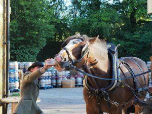 dray horses