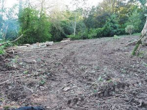 area for replanting