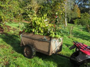 cartload of plants