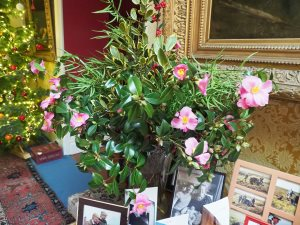vase of camellias