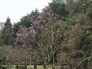 magnolia through the archway