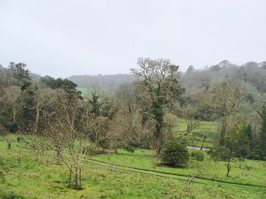 the magnolia planting area