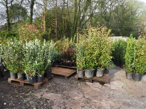 delivery to Burncoose Nurseries from Italy