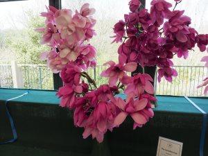 Our magnolia exhibit