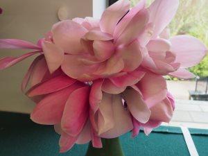 Magnolia campbellii 'Princess Margaret'