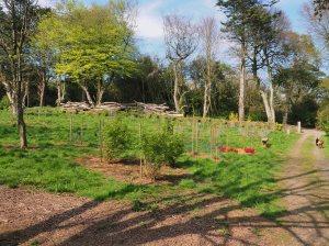 Tin Garden