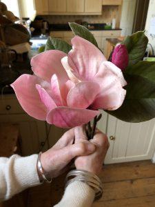 Magnolia 'Martha Joan Leslie'