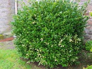 first bush