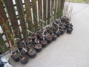 plants from Mark Bulk