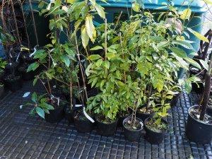 piles of plants