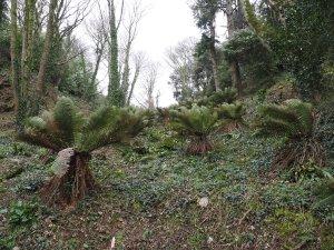 tree fern valley
