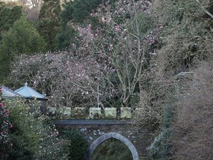 Magnolias through the archway