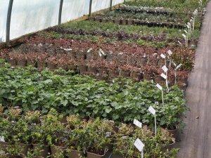 shrub liners