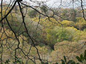 poplars (left) and oaks