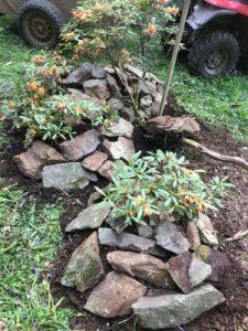 Rhododendron floccigerum