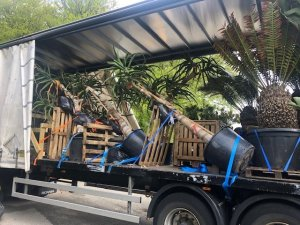 consignment from Burncoose Nurseries to the Channel Islands
