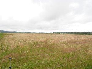 marsh reserve