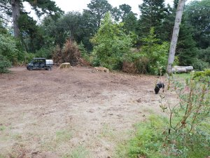 new planting area
