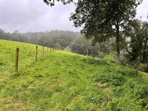 White Stiles field